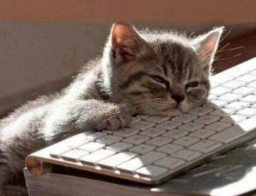 """Πόσο """"έξυπνη"""" είναι η γάτα σας;"""